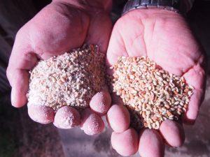 小麦、大豆、米ぬか、米、サイレージなどを配合した飼料を与えています。