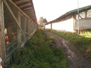 金網を貼ることで野鳥の侵入を防いでいます。